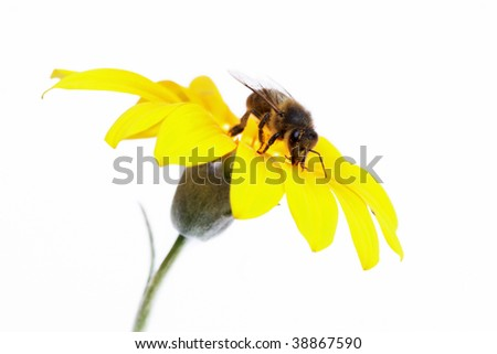 Bee honey yellow - stock photo