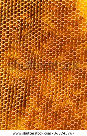 Bee honeycombs with honey close up, a natural background - stock photo