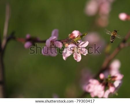 Bee in work - stock photo