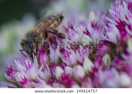 bee is working on the flowers - stock photo