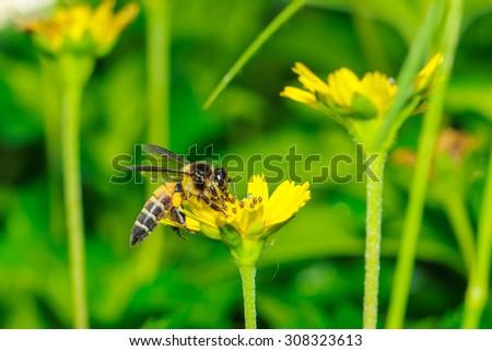 Bee - Macro Bee - focus in the eye. - stock photo