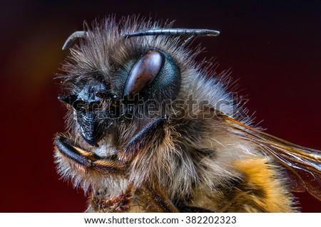 bee, macro, wild, nature, eyes, fly - stock photo