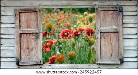 bee on a daisy flower - stock photo
