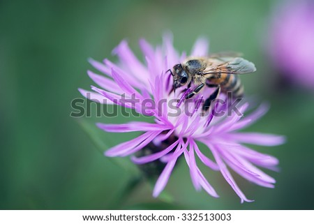 Bee on a Flower - stock photo