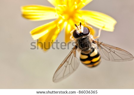 Bee on a flower. Close up - stock photo