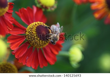 Bee on a red flower - stock photo