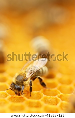 Bee on honey wax  - stock photo
