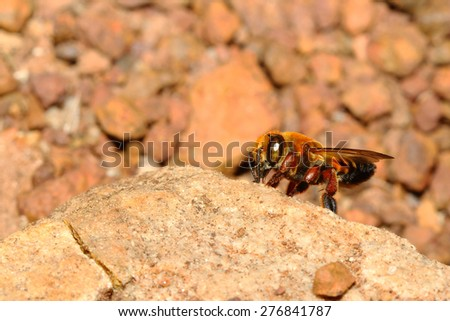 Bee on rock in forest thailand - stock photo