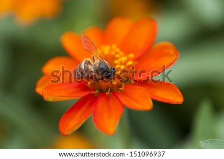 Bee pollen. - stock photo
