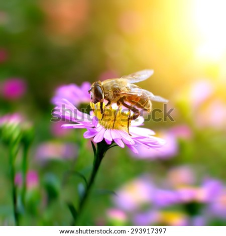 Bee sitting on the Flower in the Garden closeup - stock photo