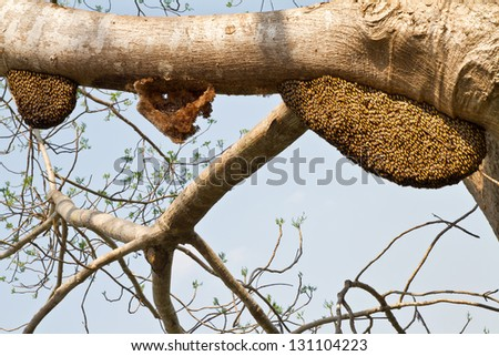 Bee swarms on tree - stock photo