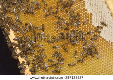 Bee working - stock photo