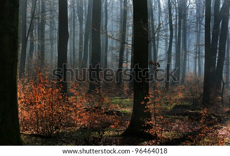 Beech forest in the morning light - stock photo