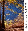 Beech forest near the lake in autumn - stock photo