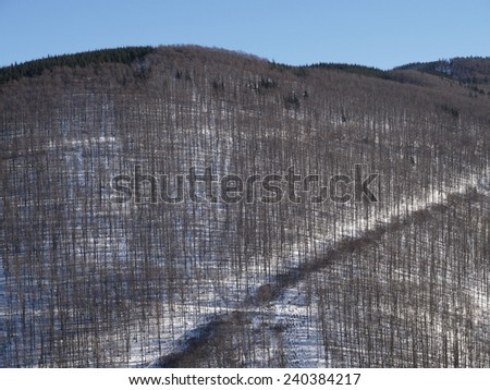 Beech forest on mountainside in winter - stock photo