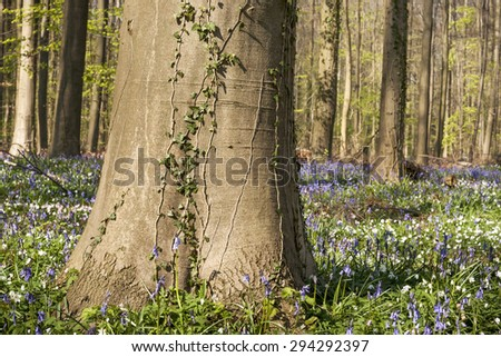 beech tree trunk surrounded by wild flowers  - stock photo