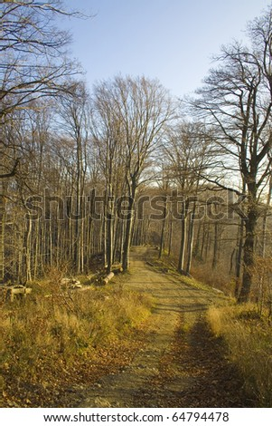 Beech trees in the forest on a mountain slope on a bright sunny day. - stock photo