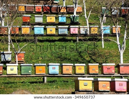 Beehives / Group of beehives / Serbia - stock photo