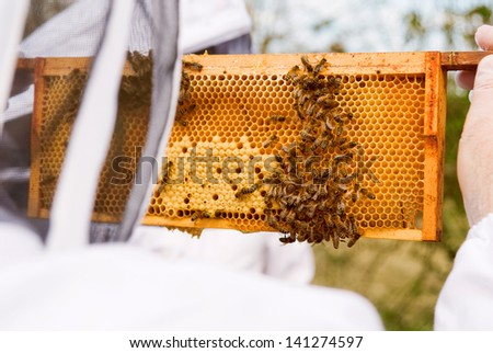 beekeeper at an apiary examining frame from bee hive in summer on a sunny day. - stock photo