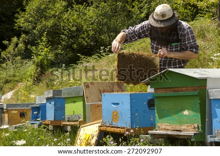 beekeeper at work in Italy - stock photo