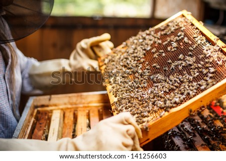 Beekeeper holding a frame of honeycomb - stock photo