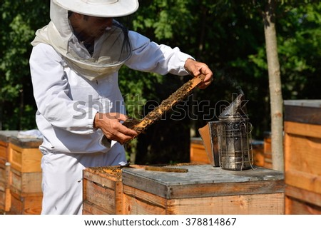 Beekeeper in a protective hat wearing on white shirt holding a frame of honeycomb with working bees - stock photo