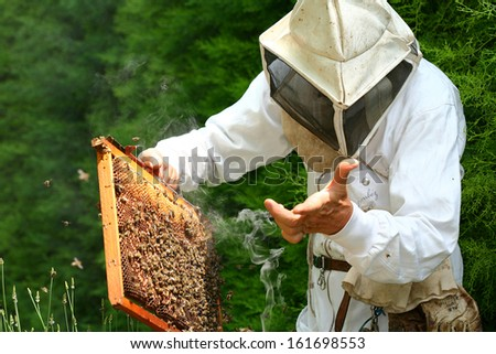 beekeeper in action - stock photo