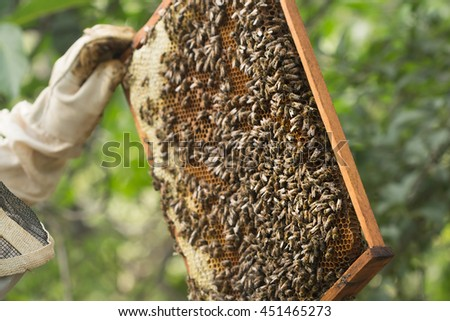 Beekeeper inspects a frame with bees and some honey sealed. Selective focus image in natural light on a sunny summer day - stock photo
