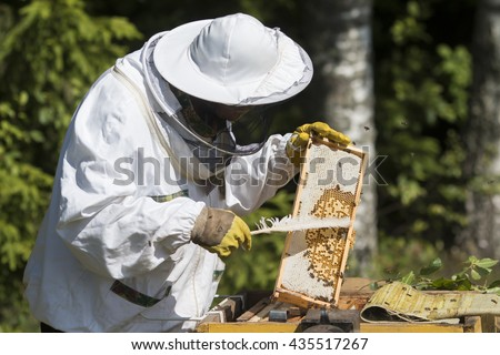 Beekeeper on apiary. Beekeeper pulling frame from the hive - stock photo