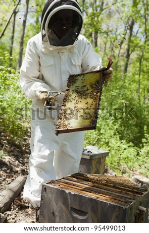 Beekeeper wearing protective clothing inspects the honeycomb - stock photo