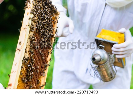 Beekeeper with smoker controlling beehive and comb frame  - stock photo