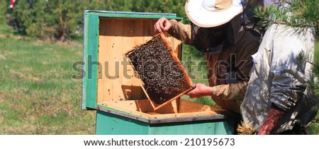 Beekeepers checking a beehive - stock photo