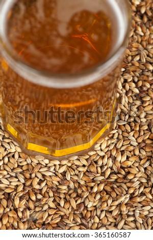 beer glass at malt grains - stock photo