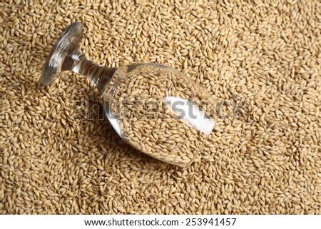 Beer glass full of barley malt lying on malt grains - stock photo