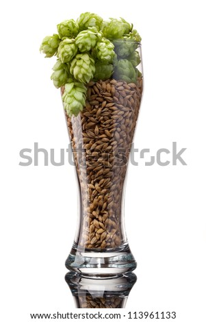 Beer glass with barley and hop - stock photo