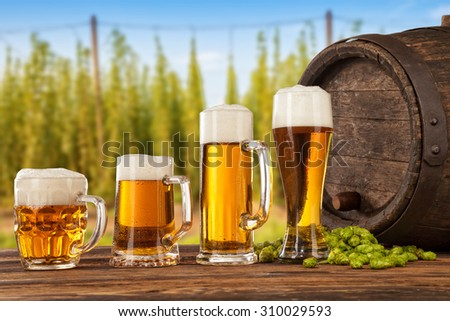 Beer glasses served on wooden desk with keg. Hop-field on background - stock photo