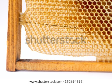 Beer honey in honeycombs. Natural sweet. - stock photo