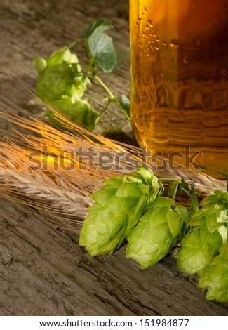 beer hop cones and barley - stock photo
