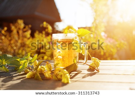 Beer. Mug with beer and hop on sunset summer autumn background. The backlit. Summertime, the party countryside in nature. - stock photo
