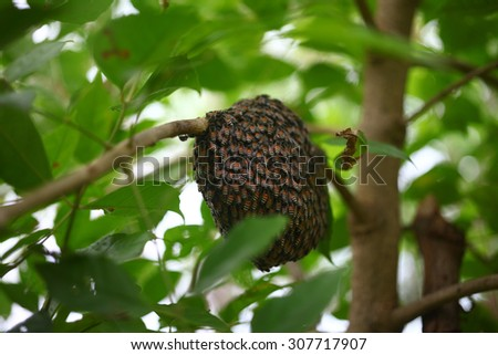 Bees and honeycomp on a branch tree - stock photo
