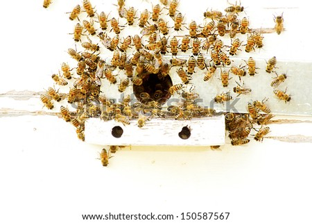 Bees at a beehive - stock photo