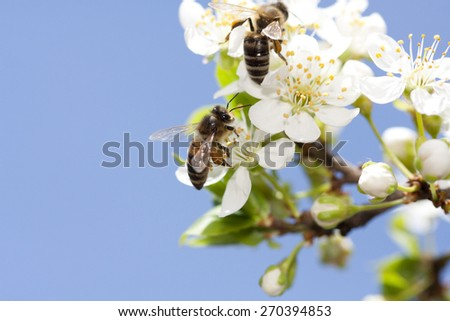 Bees collect pollen group - stock photo