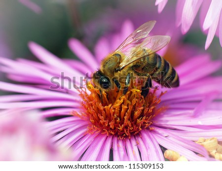 Bees collecting nectar - stock photo