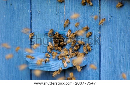 Bees fly into the hive. - stock photo