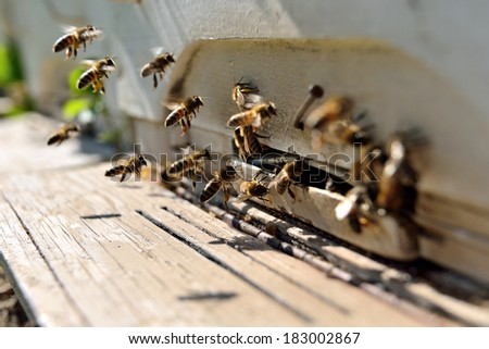 bees flying in front of a beehive - stock photo