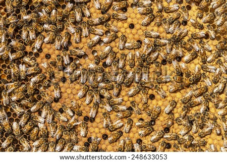 Bees in a Hive - stock photo