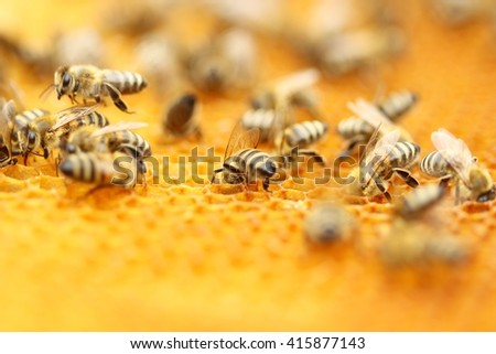 Bees in honeycomb - stock photo