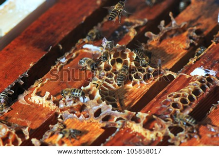 bees inside the hive close up - stock photo