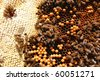 Bees on honeycomb - stock photo