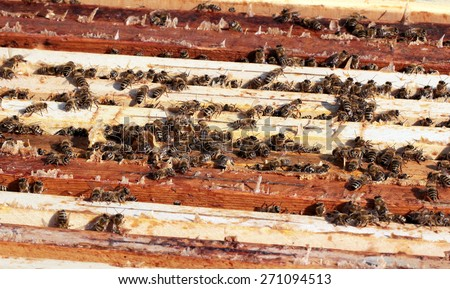 Bees on honeycomb in hive - stock photo